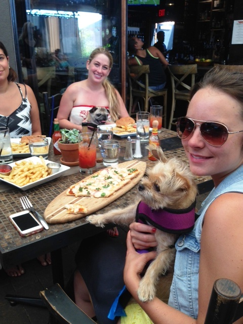 The Patio Patrons with Pets